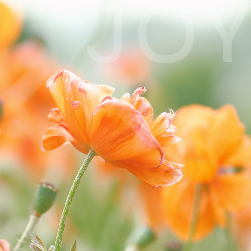 Orange blossom JOY